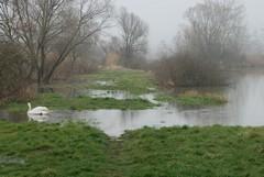 Tőzeg – húsvéti áradás, 2013.